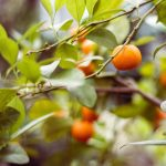 Overcome Grief and Sadness with Mandarin Essential Oil